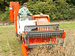 大豆の刈り取り2